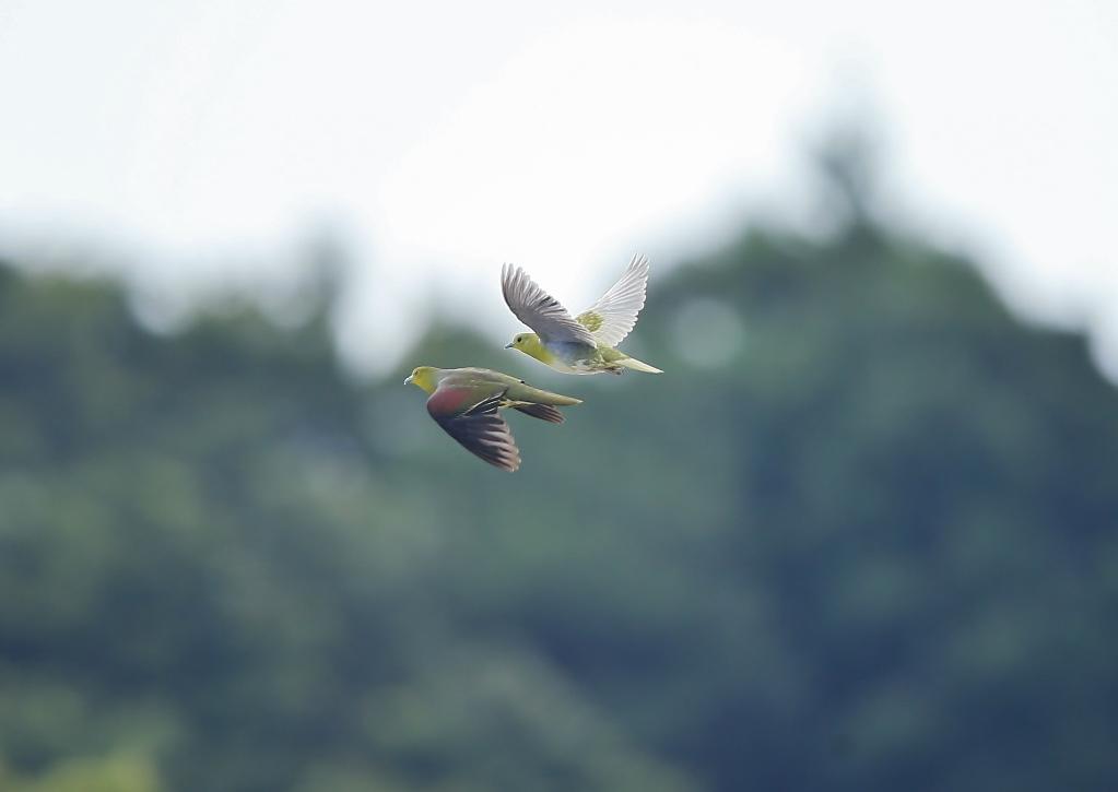 鳥撮り運まかせ